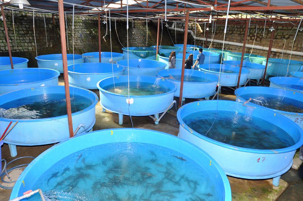 Ozon in de vis kwekerij